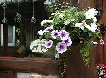 不思議草の看板と花