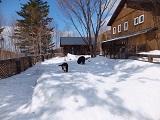 雪の中遊ぶ犬