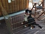 ケージに入っている犬