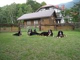 犬達と建物