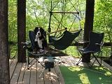 椅子にすわる犬