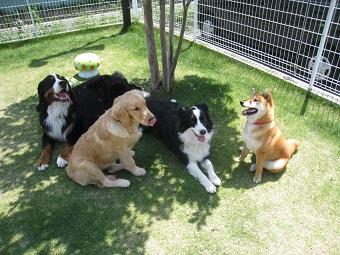 木陰で涼む犬達