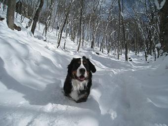 雪に埋まっている犬