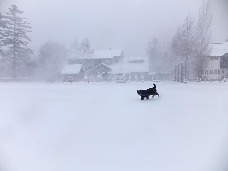 141215積雪