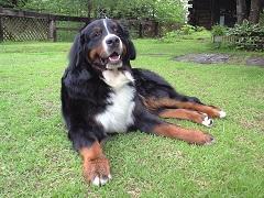 signboarddog_img_Humphrey