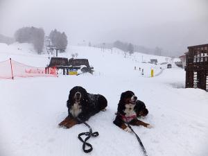 150115丸沼高原スキー場