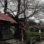 150422山妻有の桜b
