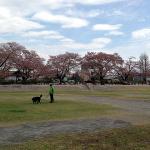 150422沼田城址公園