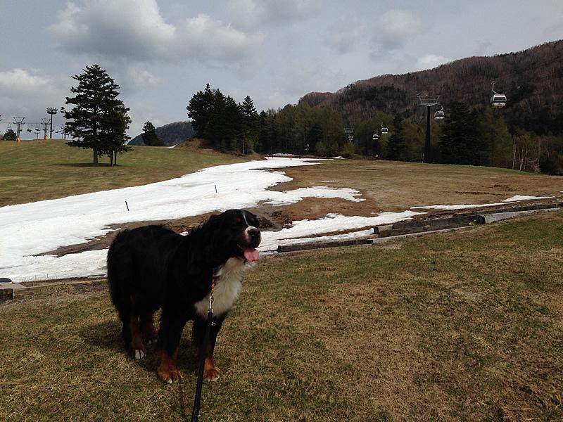 150506丸沼高原スキー場