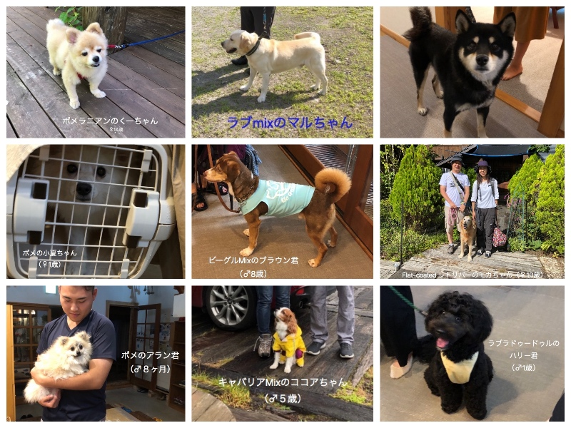 お盆DogCollage_Fotor